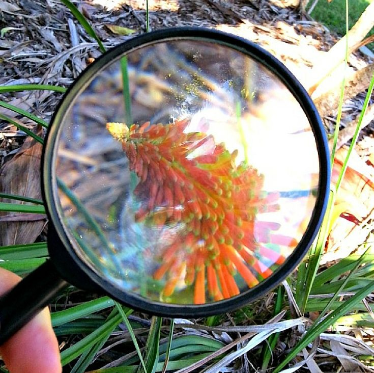 Colour-Hunt-In-Nature