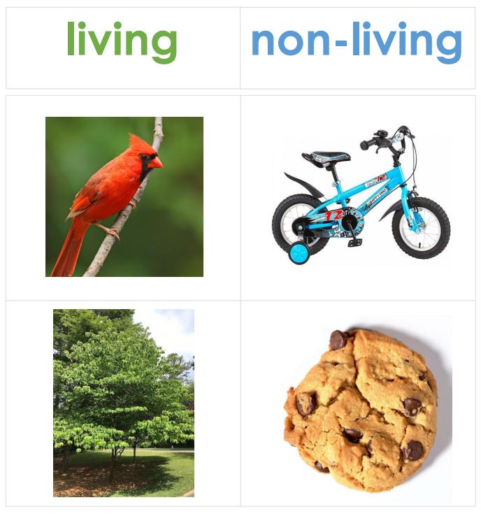 LivingNonLiving