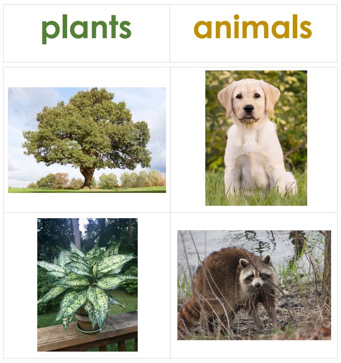 PlantOrAnimal